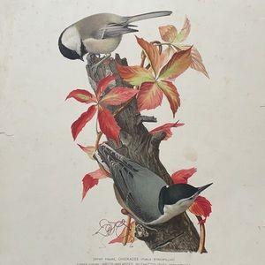 Antique original Bird print Ornithological